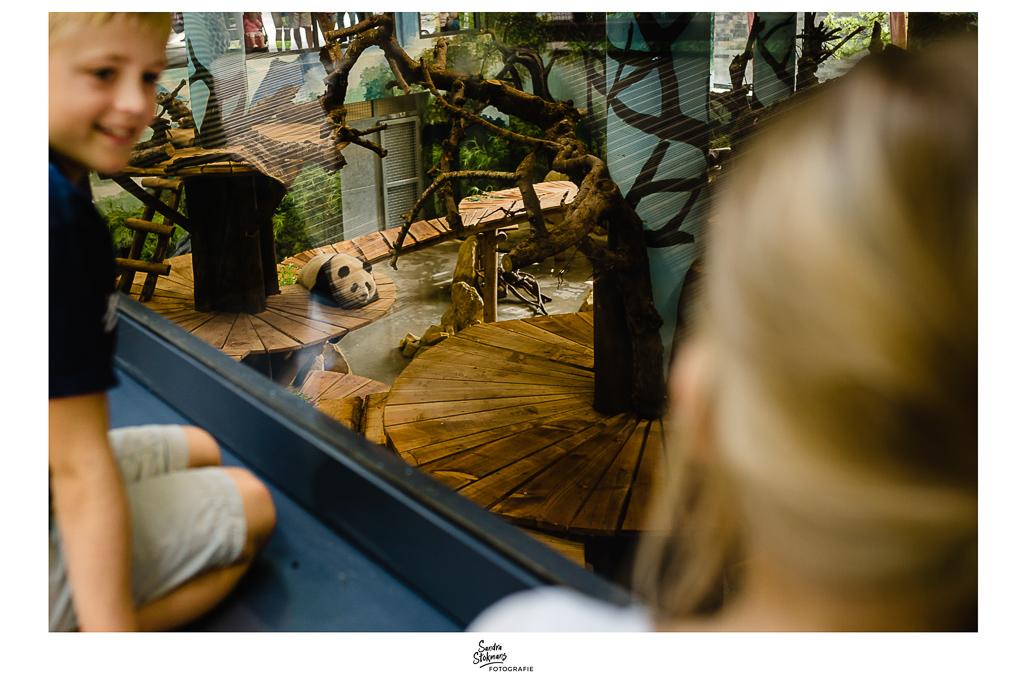365 Dagen Project, Panda in Pandaverblijf in Ouwehands Dierenpark in Rhenen, foto door Sandra Stokmans Fotografie