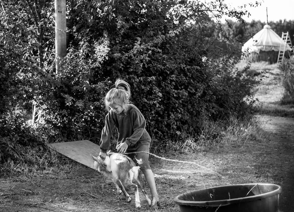 Kind probeert geit te laten zien wie de baas is, foto Fotograf Frederikke Brostrup